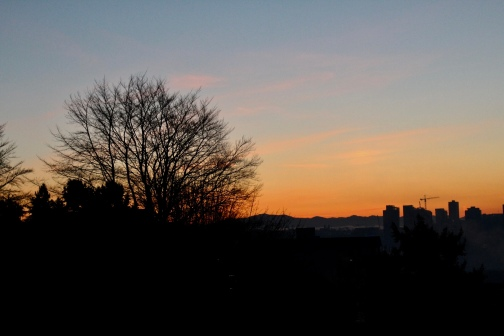 Leafless tree backed by the sunrise from Kerry Park, Seattle- December 2017